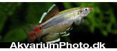 aquariumphoto